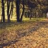Золотая осень - золотые годы